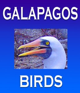 Galapagos Islands Birds eBook Cover, Moses Michelsohn, Photographer
